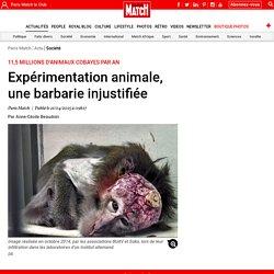 11,5 millions d'animaux cobayes par an - Expérimentation animale, une barbarie injustifiée