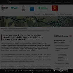 Bâti Alim : Expérimentations pour une gestion durable du bâti alimentaire - Expérimentation 4 : Atelier collectif d'abattage à la ferme de petits ruminants, dans l'Hérault