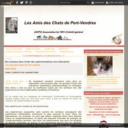 Des animaux dans l'enfer des expérimentations d'un laboratoire - Les Amis des Chats de Port-Vendres (APCV)