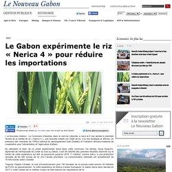 Le Gabon expérimente le riz « Nerica 4 » pour réduire les importations - Le Nouveau Gabon
