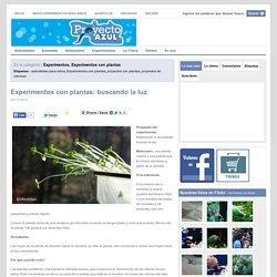 Experimentos con plantas: buscando la luz