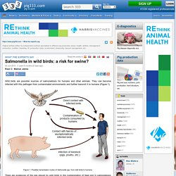 PIG333 03/06/13 Salmonella in wild birds: a risk for swine?