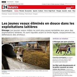 Elevage: Les jeunes veaux éliminés en douce dans les exploitations laitières