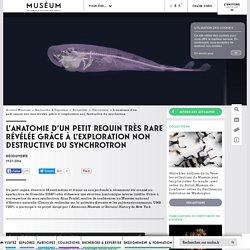 L'anatomie d'un petit requin très rare révélée grâce à l'exploration non destructive du synchrotron