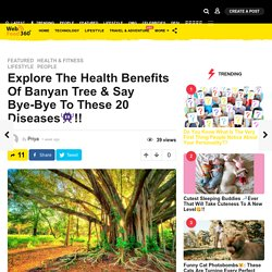 Learn About Health Benefits of Banyan Tree