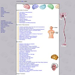 Explore the nervous system