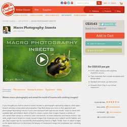 Explore Macro Insect Photography in Macro Photography: Insects