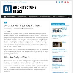 Explore the 5 Best Tips for Planting Backyard Trees