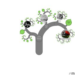 OneZoom Tree of Life Explorer: euryarchaeotes
