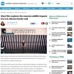 Short film explores the massive wildlife impacts of a U.S.-Mexico border wall