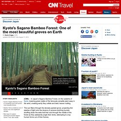 Exploring Kyoto's Sagano Bamboo Forest