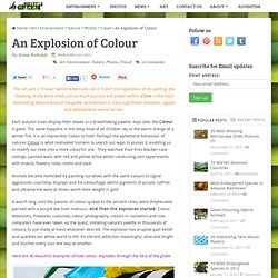 An Explosion of Colour