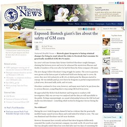 Exposed: Biotech giant's lies about the safety of GM corn