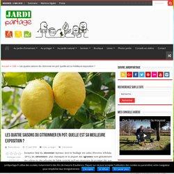 Exposition du citronnier en pot: où l'installer ?