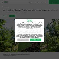Une exposition dans les Vosges pour changer de regard sur la faune...