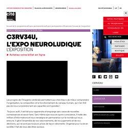 L'exposition - Cerveau