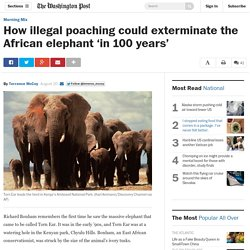 How illegal poaching could exterminate the African elephant 'in 100 years'