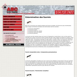 Extermination de fourmis Montréal - Exterminateur Fourmis