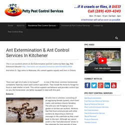 Ant Extermination & Ant Control Services In Kitchener