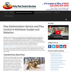 Flea Extermination Service and Flea Control in Kitchener, Guelph Waterloo