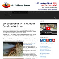 Bed Bug Exterminator - Kitchener Guelph and Waterloo