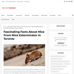 Fascinating Facts About Mice From Mice Exterminator In Toronto - Canada Search