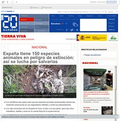 España tiene 150 especies animales en peligro de extinción: así se lucha por salvarlas