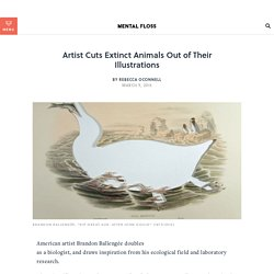 Artist Cuts Extinct Animals Out of Their Illustrations