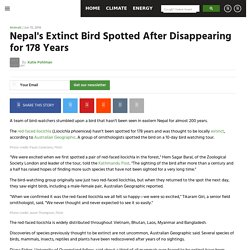 Nepal's Extinct Bird Spotted After Disappearing for 178 Years - EcoWatch