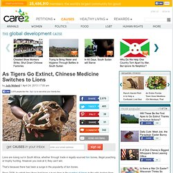 As Tigers Go Extinct, Chinese Medicine Switches to Lions