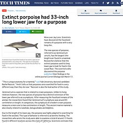 Extinct porpoise had 33-inch long lower jaw for a purpose : SCIENCE
