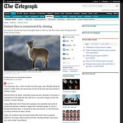 Extinct ibex is resurrected by cloning