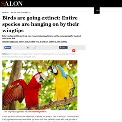 Birds Going Extinct