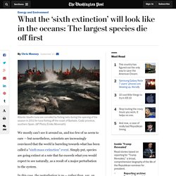 What the 'sixth extinction' will look like in the oceans: The largest species die off first