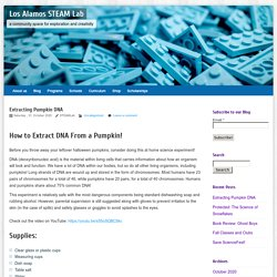 Extracting Pumpkin DNA – Los Alamos STEAM Lab