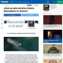 Que-es-esta-extrana-criatura-descubierta-en-Grecia