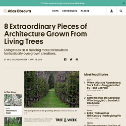 8 Extraordinary Pieces of Architecture Grown From Living Trees