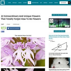 22 Extraordinary And Unique Flowers That Totally Forgot How To Be FlowersOnemorepost