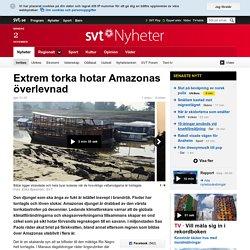 Extrem torka hotar Amazonas överlevnad