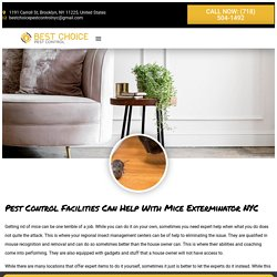 Pest Control Facilities Can Help With Mice Exterminator NYC