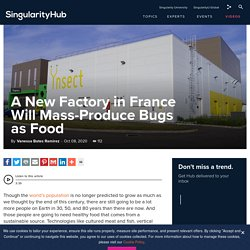 A New Factory in France Will Mass-Produce Bugs as Food