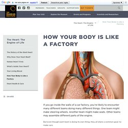How Your Body is Like a Factory