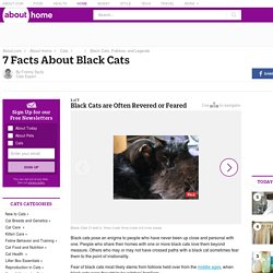 7 Facts About Black Cats - Introduction