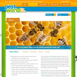 Bees - Facts About Bees - Types of Bees - PestWorldforKids.org