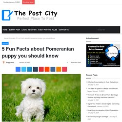 5 Fun Facts about Pomeranian puppy you should know