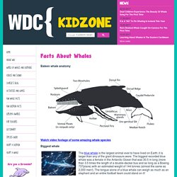 Facts About Whales - WDC Kidzone
