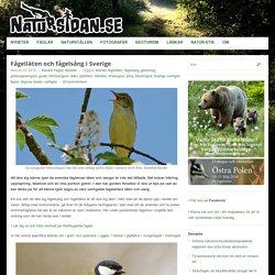 Fågelläten och fågelsång i Sverige