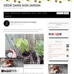 Faire germer un noyau de mangue – Dédé dans son jardin