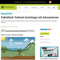 Faktablad: Vattnets kretslopp och fotosyntesen