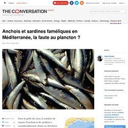 THE CONVERSATION 04/04/16 Anchois et sardines faméliques en Méditerranée, la faute au plancton ?